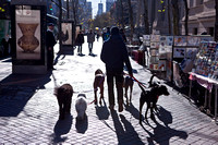 Walking The Dog, New York